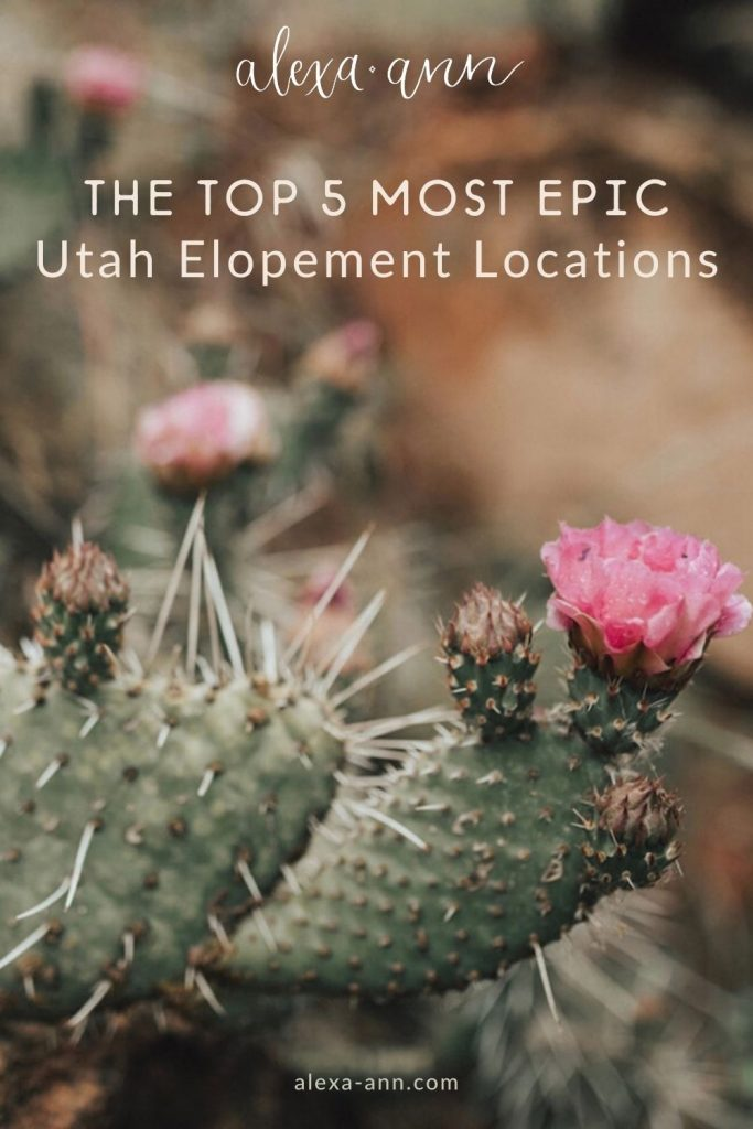 A close up image of a cactus with flowers in the desert of Utah overlaid with text that reads The Top 5 Most Epic Utah Elopement Locations.